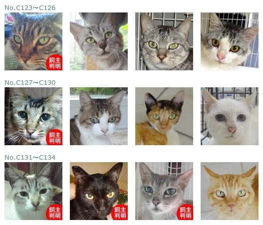 福島保護猫10