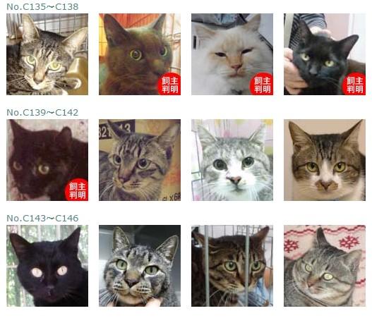 福島保護猫11