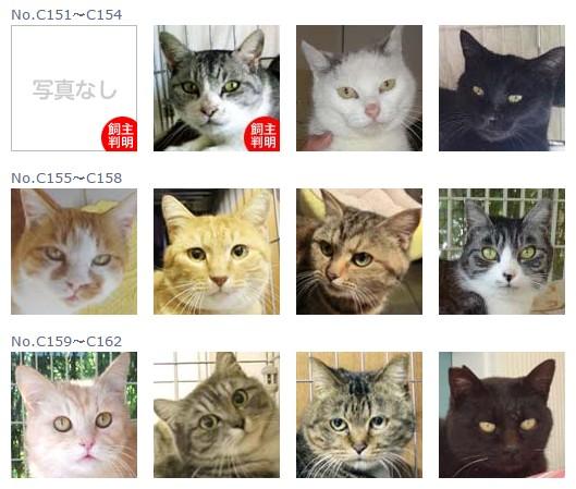 福島保護猫13