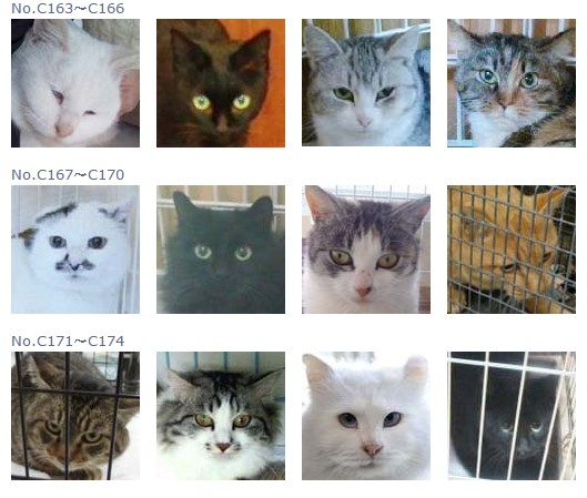 福島保護猫14
