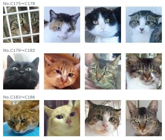 福島保護猫15