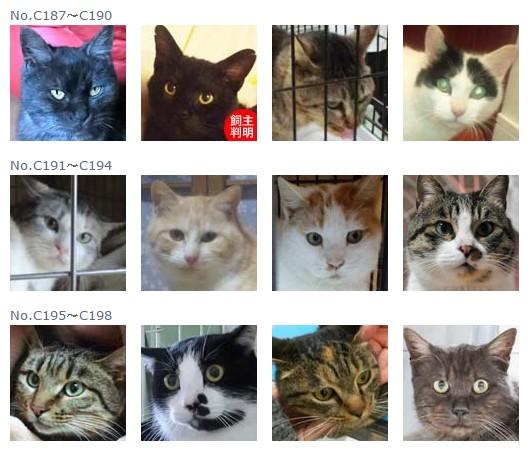 福島保護猫16