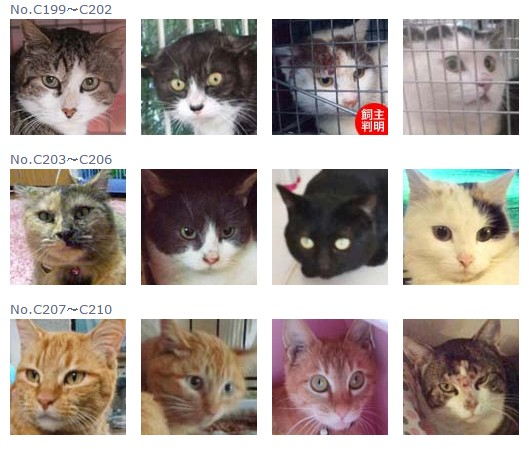 福島保護猫17