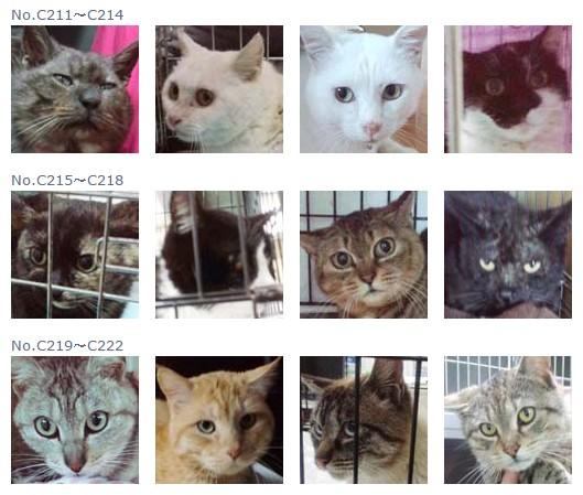 福島保護猫18