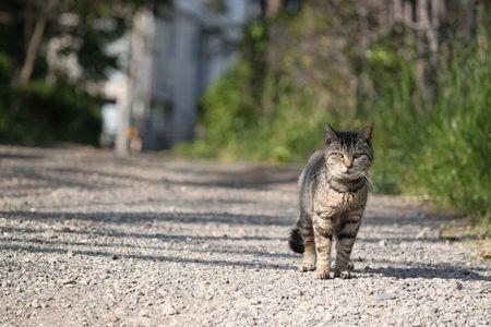 歩く猫450