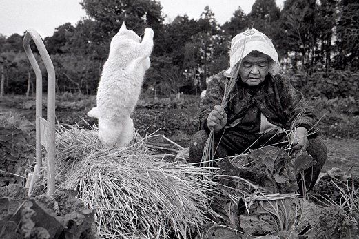 0e grandmother-and-cat-miyoko-ihara-fukumaru-10