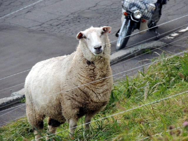 羊君DSCN1050