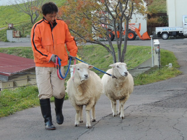 羊終業DSCN1070