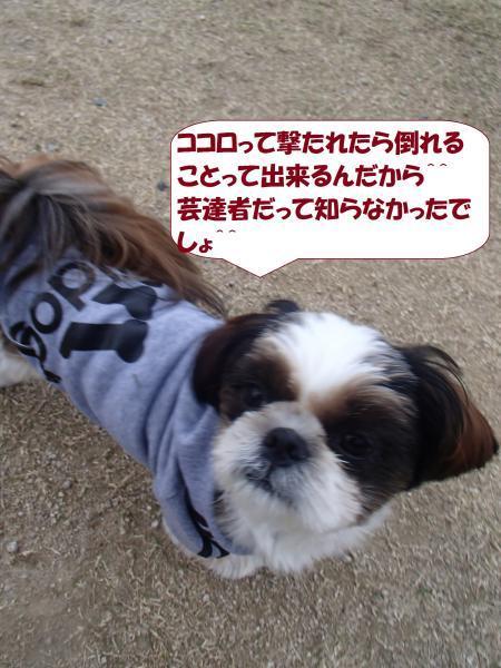 PB061313_convert_20161107144505.jpg