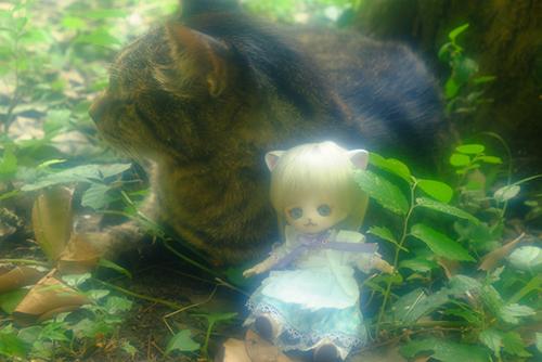 オビツ11ボディ、PARABOXヒカリちゃんヘッドをカスタムして作った猫っ子ポーの夏のお散歩。猫さんに会いました