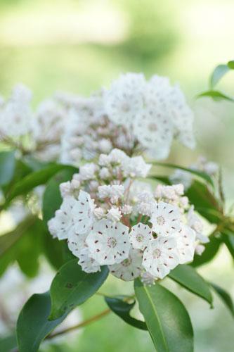 20160515白い花