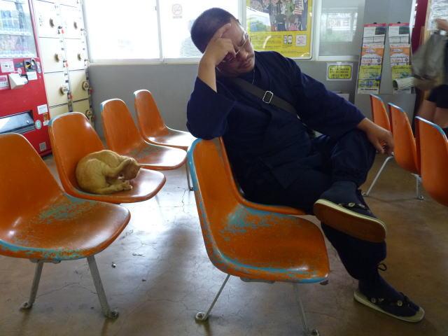 加治木駅の猫