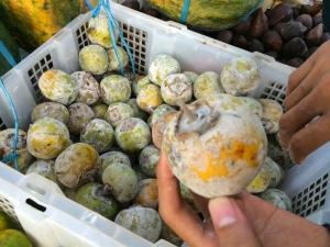 インドネシアの柿