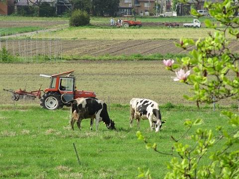 農場風景0425