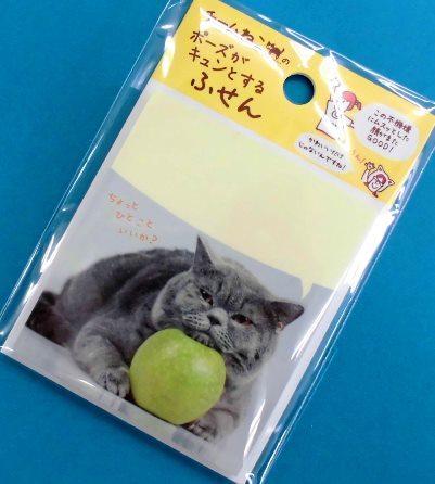 チーム猫好き (3)