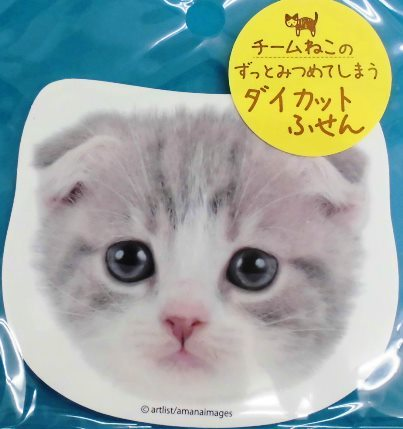 チーム猫好き (5)