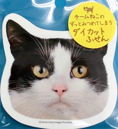 チーム猫好き (6)