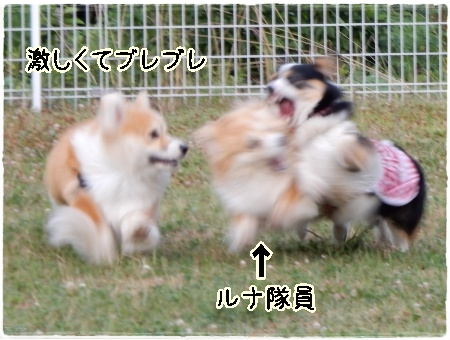runacchi1.jpg