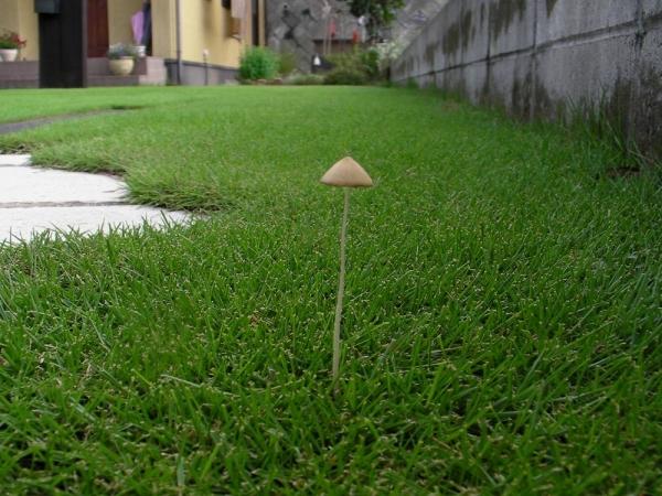 に キノコ 芝生 生える