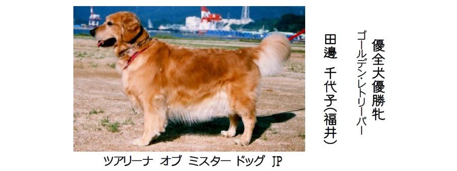 20161002-03展覧会成績-全犬種優全犬優勝