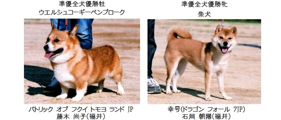 20161002-04展覧会成績-全犬種準優全犬優勝