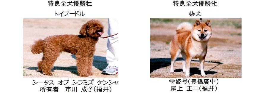 20161002-05展覧会成績-全犬種特良全犬優勝