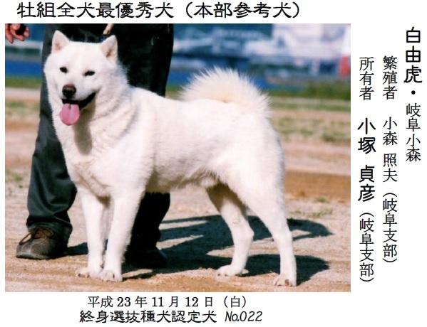20161002-06展覧会成績-北海道犬最優秀犬03白由虎