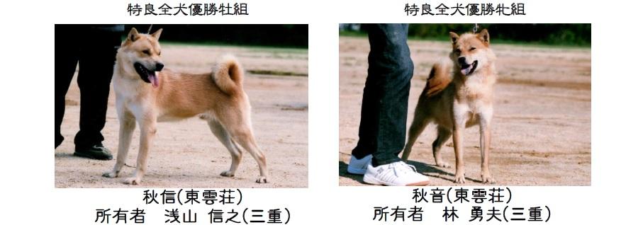 20161002-10展覧会成績-北海道犬特良全犬