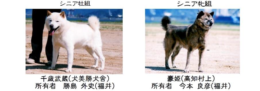 20161002-11展覧会成績-北海道犬シニア全犬