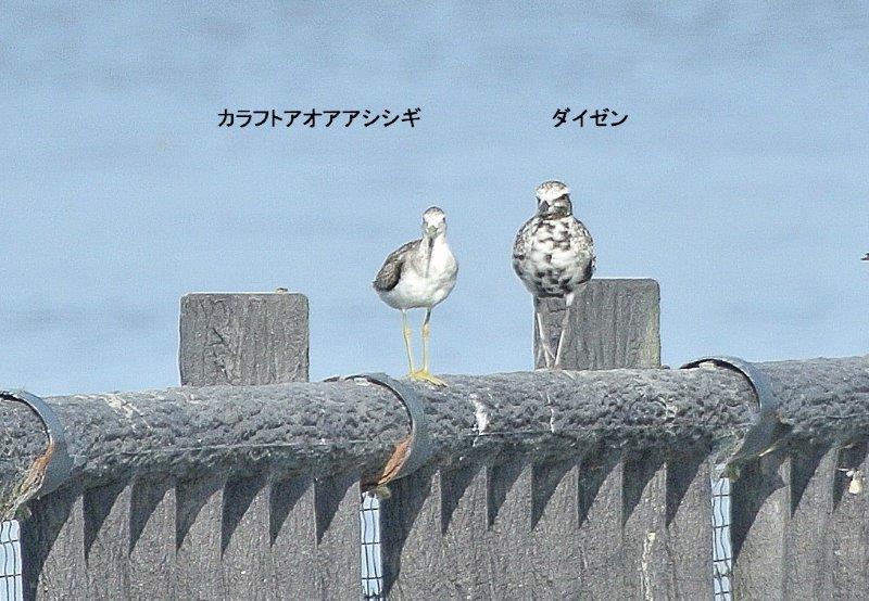 DSC_6882.jpg