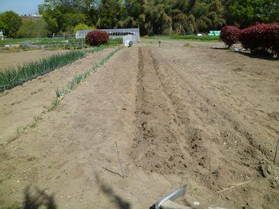段々と、畑仕事が始まる
