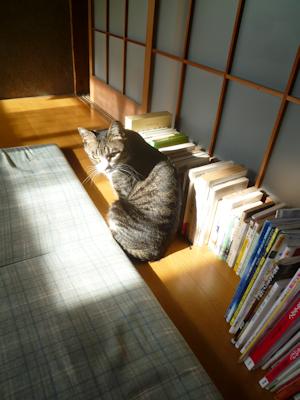 日向を待つ猫