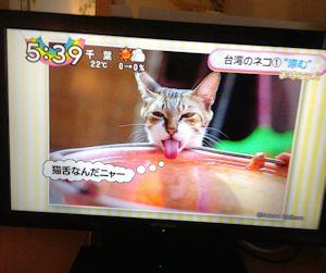 ホテルの朝は久々の猫テレビ