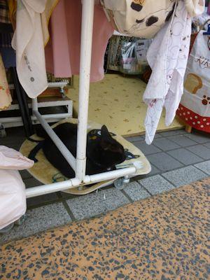 雑貨屋さんの猫
