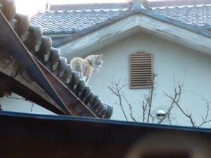 屋根からコンチハ