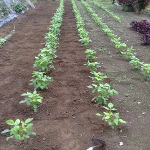 緑化する畑