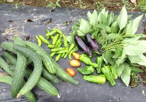 雨の止み間に収穫