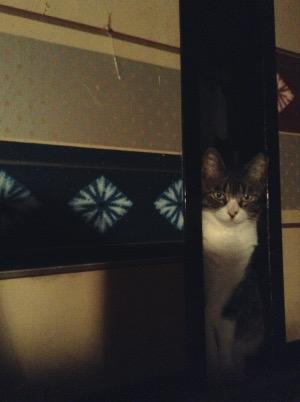 起き待ち猫