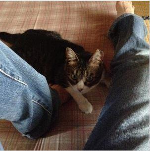 付き合いの良い猫