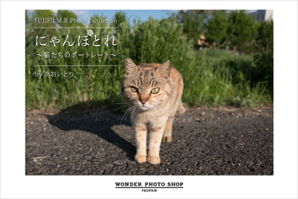 にゃんぽとれ~猫たちのポートレート~by あおいとり