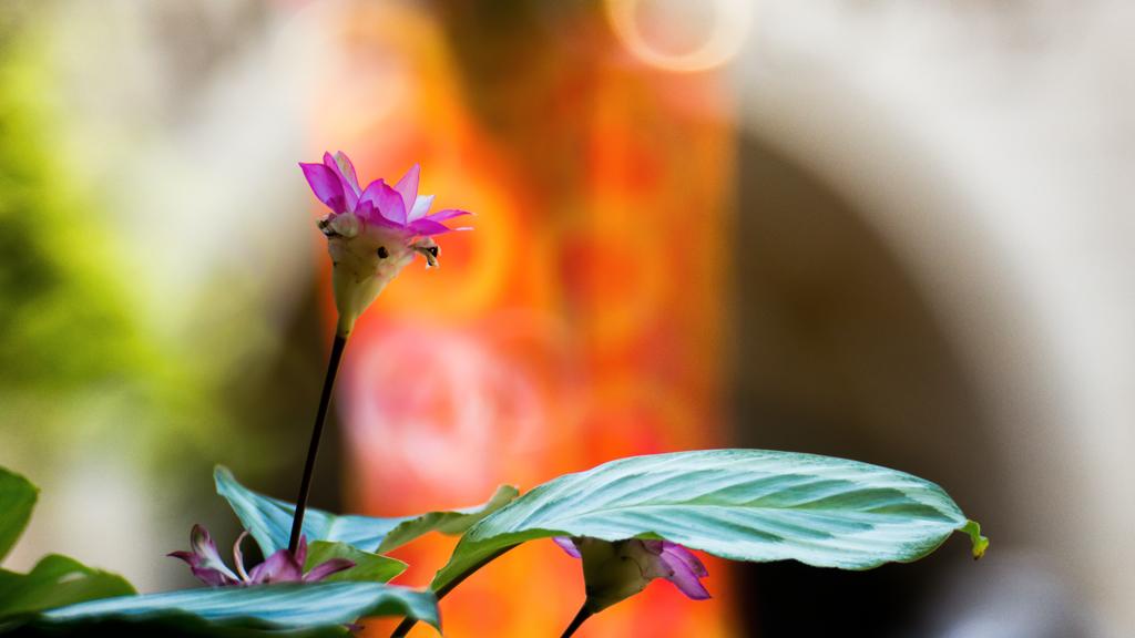 パークの花(ミッキー広場)