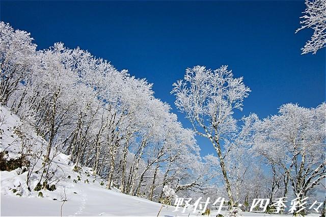 s-Canon20161107-110700-0.jpg