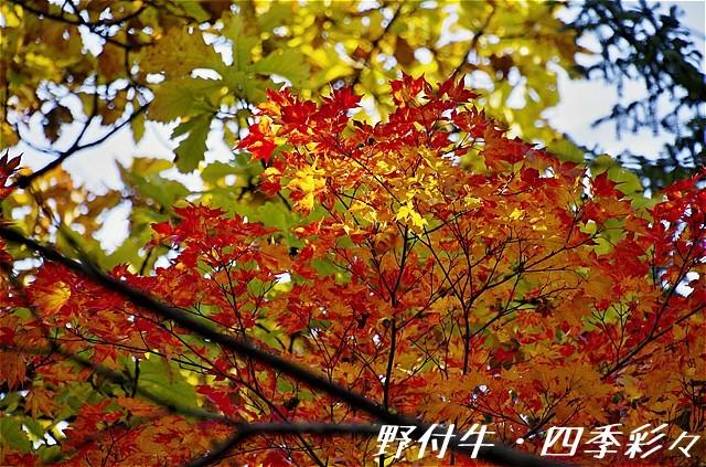 s-P20161028-142028-0.jpg