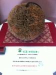 160827 (135)南部杜氏伝承館_杉玉