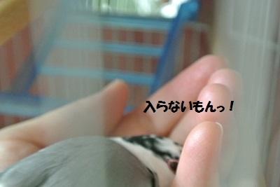DSC_6320済