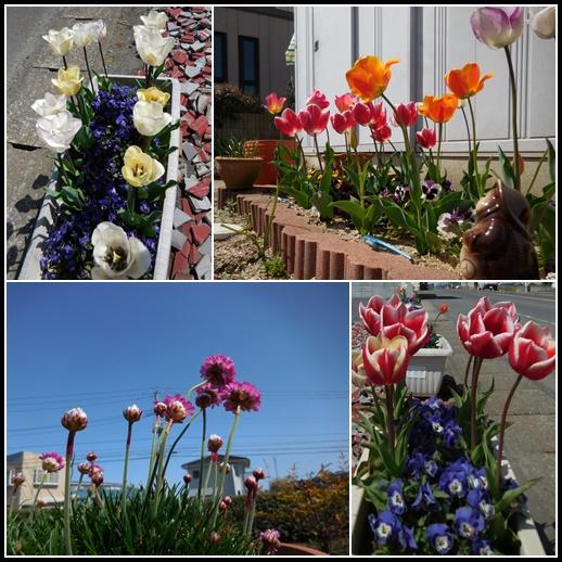 庭の花4月