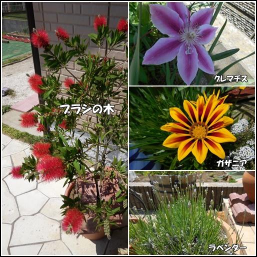 庭の花5月21日