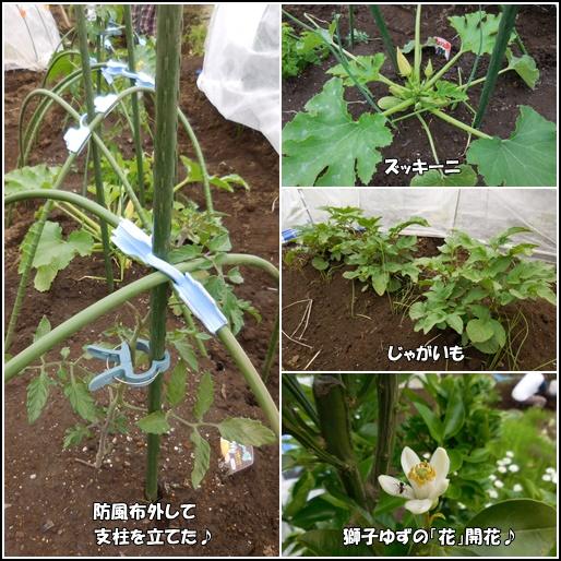 庭の野菜5月28日