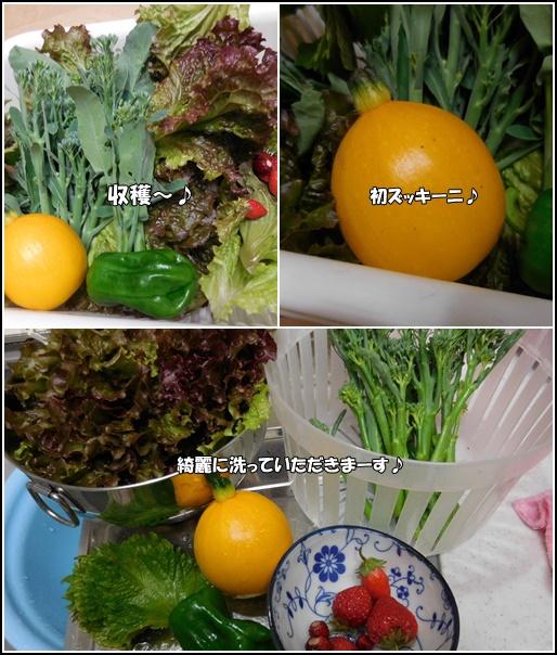 6月19日収穫♪