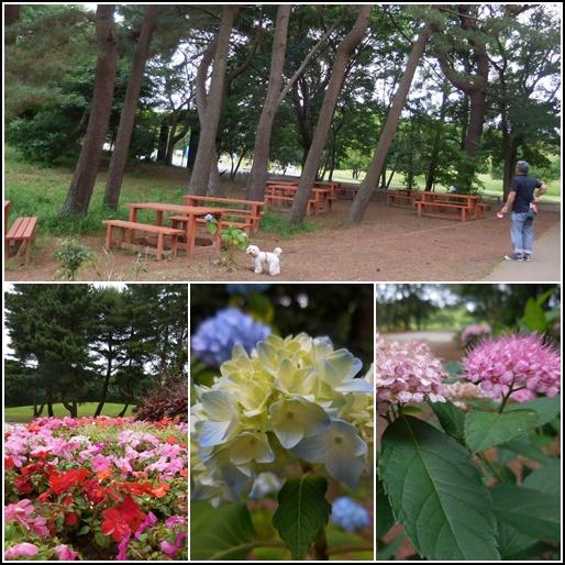 6月19日 大きな公園の花